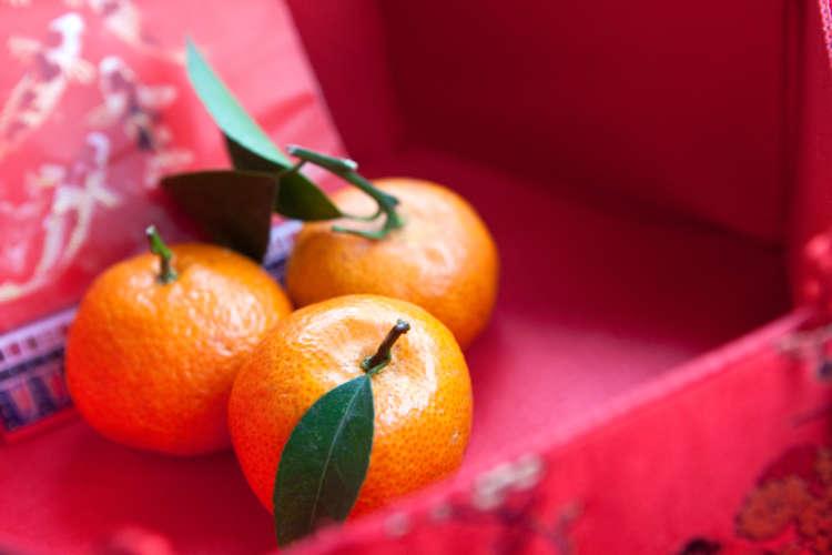 ウサギにミカンを与えていい? 柑橘類を食べる際のデメリットや注意点