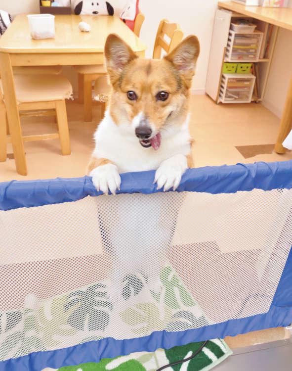 怒っている時。例えば、知らない犬が飼い主といちゃいちゃしていると、飛びついてしまうこともある。