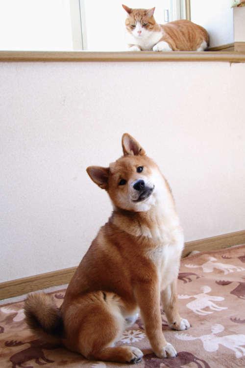 「今日の撮影、主役はぼくだよね♪」。キメ顔の子犬・福三郎(4ヶ月♂)の背後で、冷めた目をした福次郎