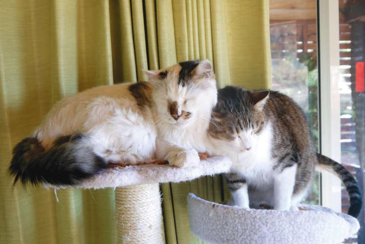 100匹の猫たちが待つ秩父の保護施設【from Japan】