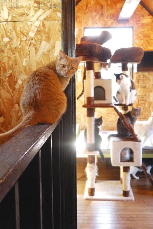 自由に動き回る猫たち