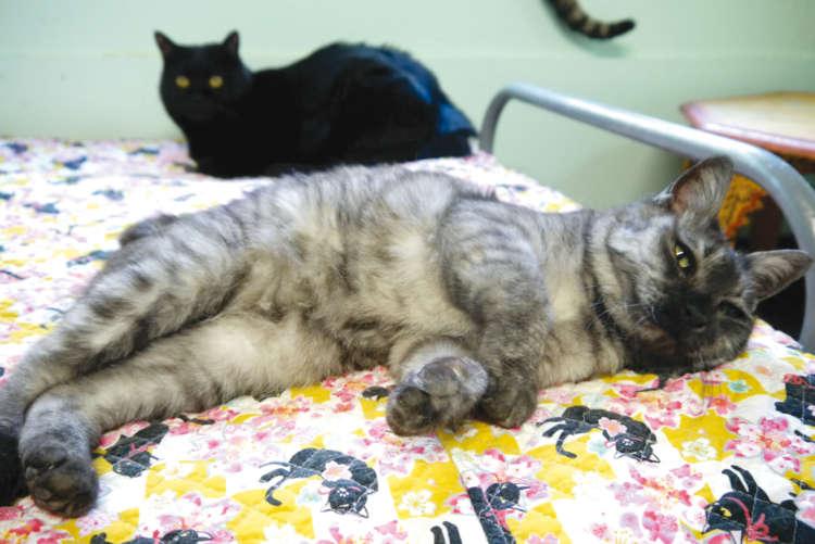 みんなに人気の猫ベッドでリラックス