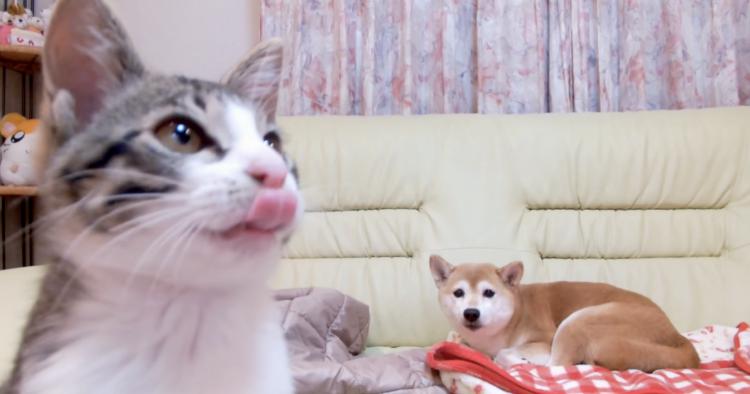 【切なくも可愛い】子ネコと遊びたかったのに、想いが届かなかったワンコのお顔が …(´・ω・`)