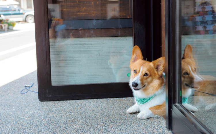 旅館の正面玄関が看板犬ハッピーの定位置。