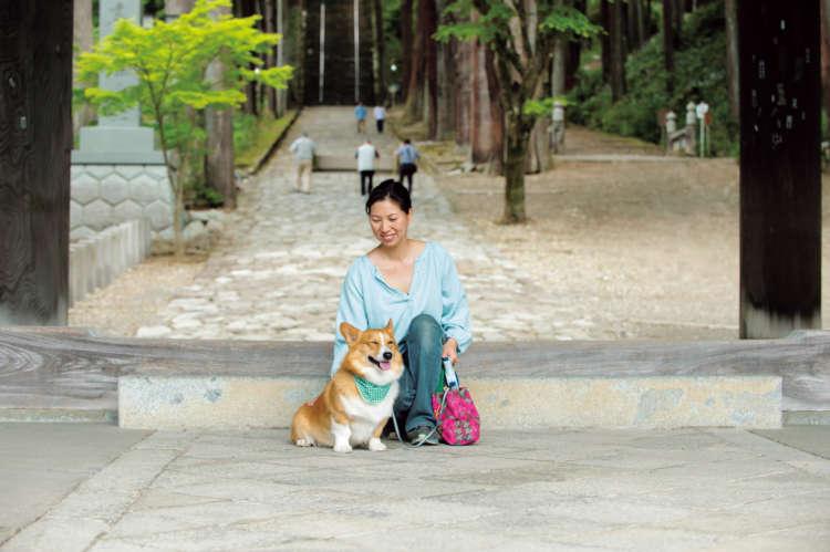 三門から菩提梯、男坂、身延山久遠寺境内をぐるりと回って家に戻るコースがハッピー流散歩の定番。