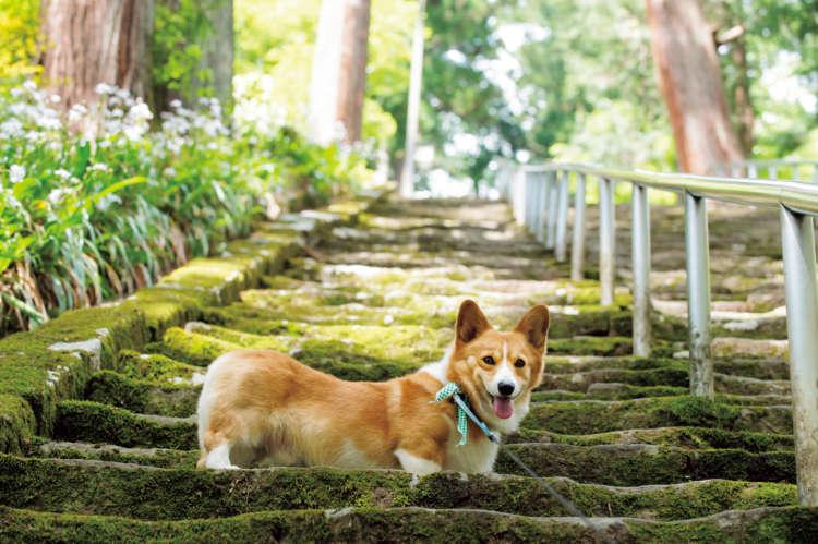 三門を抜け、菩提梯と呼ばれる287段の苔むした急な階段を上ると身延山久遠寺。