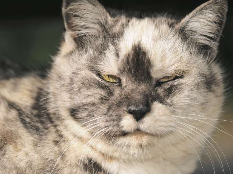 思わず「おやぶん!」と呼びたくなる!? 貫禄溢れる猫を集めた写真集「ねこおやぶん」