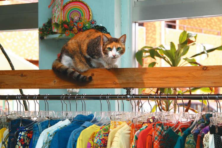 アメリカンな空間に和猫のテン。ハンガー掛けがキャットウォーク