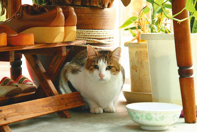 ショーウインドーエリアで招き猫担当のジン
