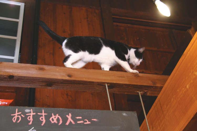 古民家を改装した店内。天井の梁からおにぎりが落ちてきそう!