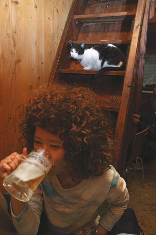 猫の視線を感じながら飲むビールが美味い♪