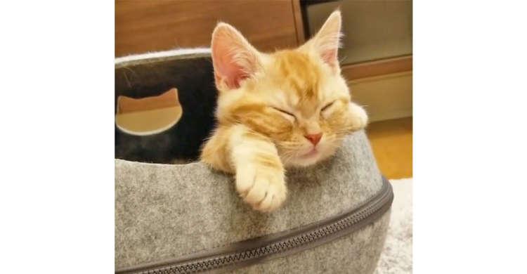 【可愛いコックリzzZ】猫ハウスの入り口で睡魔に負けたニャンコ。その時の寝相が反則級の可愛さで…♡