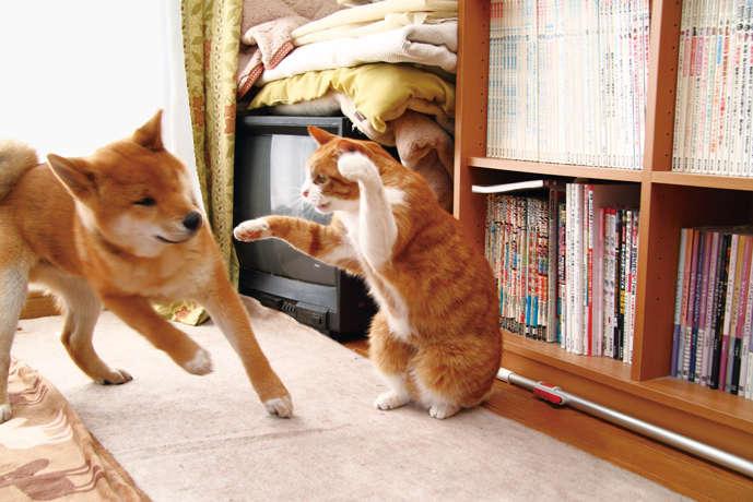 「幸子に手を出すな!」。TVの後ろに隠れた幸子を守る福次郎