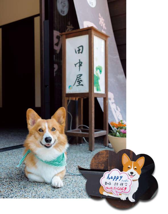 看板犬の登場は老舗旅館の新しい時代の幕開け!?