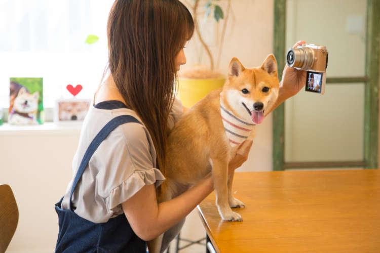 ■にこちゃん(柴犬/2歳・メス)