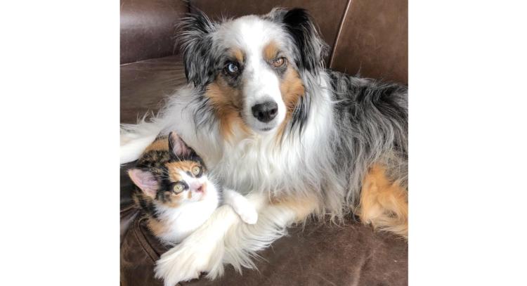 親友の猫を失い塞ぎ込んでしまった犬…「愛情を運ぶ招き猫」のような子猫と出会い、笑顔を取り戻す。