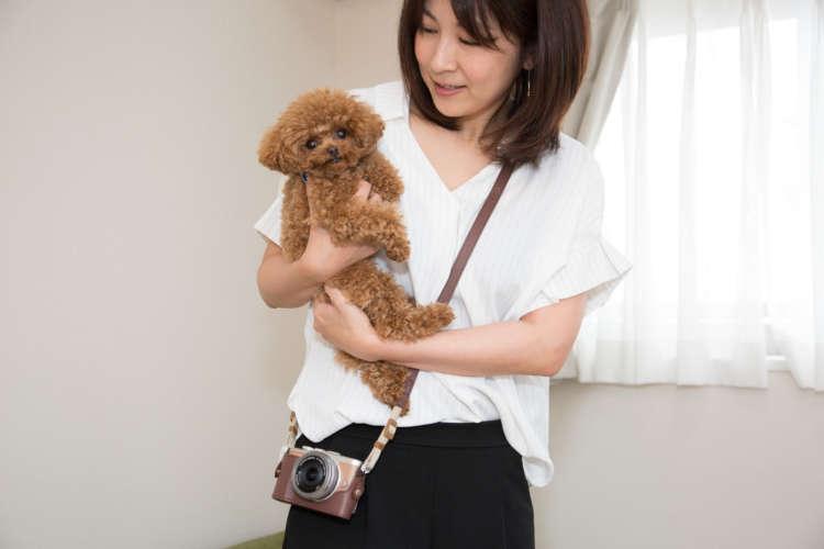 ■アンネさん(トイプードル/1歳5カ月・メス)