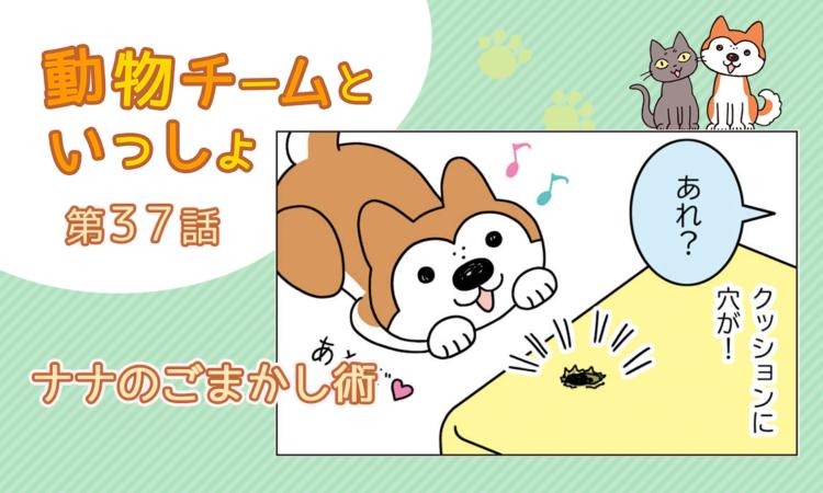 【まんが】第37話:【ナナのごまかし術】描き下ろし漫画♪「動物チームといっしょ」(著者:月田エミ)
