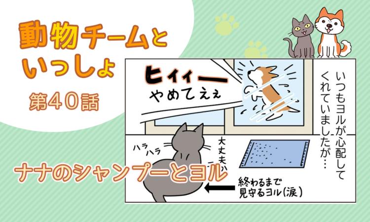 【まんが】第40話:【ナナのシャンプーとヨル】描き下ろし漫画♪「動物チームといっしょ」