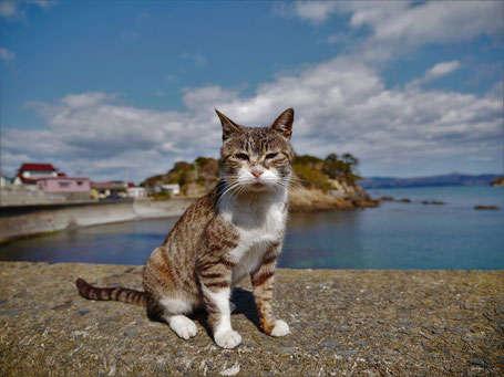 銅猫賞  タイトル 「海と空と猫」  栃木県宇都宮市  服部彰子さん