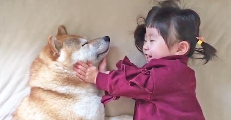 お顔をマッサージされて、と〜っても気持ちよさそうな柴犬くん!幸せそうな姿にホッコリが止まらない♡