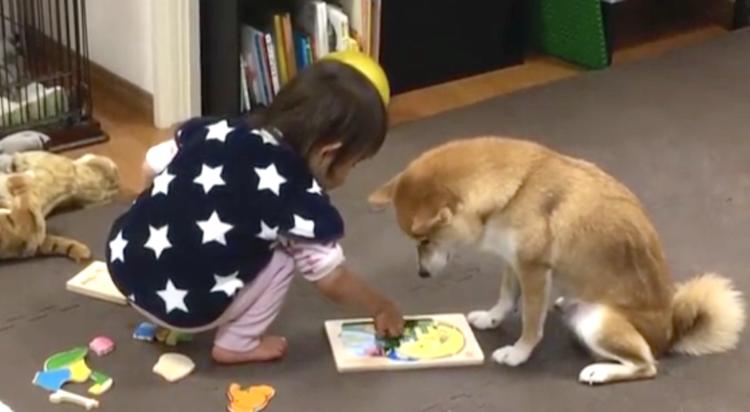 【子守するワン♪】パズルで遊ぶ子供を見守るワンコ → 面倒見よく付き合う姿に思わずニッコリ♡笑