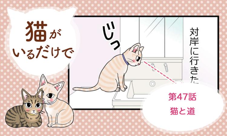 第47話:猫と道
