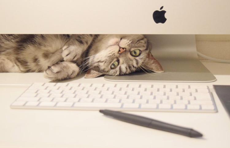 作業効率アップのために、新しいパソコンを買った → 猫の秘密基地になって、作業どころじゃなくなった♡