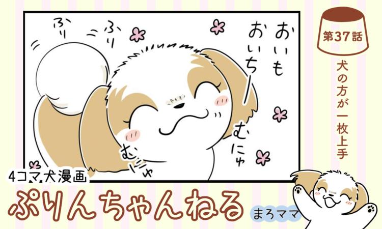 【まんが】第37話:【犬の方が一枚上手】描き下ろし漫画♪ 4コマ犬漫画「ぷりんちゃんねる」