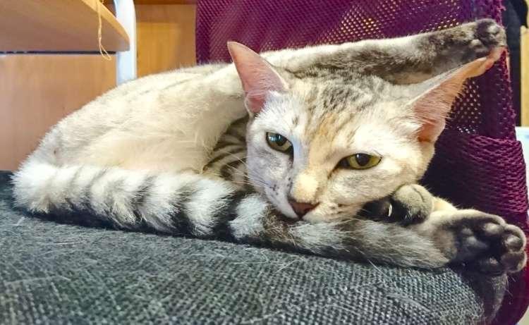【柔らか寝相のニャンコ♪】それ、どうなってるの? 飼い主さんもびっくりの寝相を披露する猫ちゃん♡