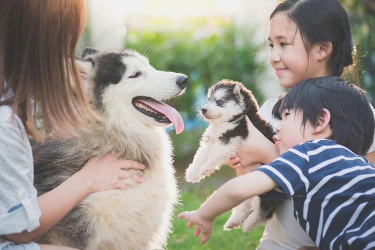 第7回 ペットとの共生推進シンポジウムのテーマは「ペットが育む心と体の健康-子供の動物介在教育-」です。ペットを家族の一員として迎え育てることで、子供の共感性や自律性などの発達を促進すると考えられるようになり、「動物介在教育」という考え方が注目されはじめました。