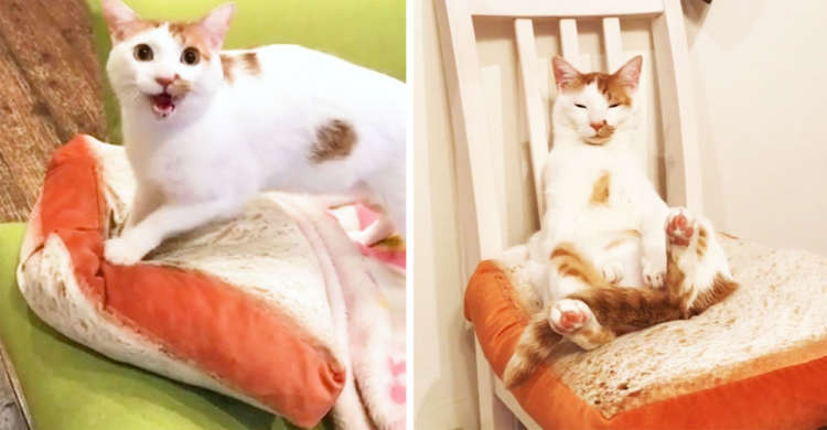 【猫のパン屋さん】パンのクッションをフミフミする→ 頑張った結果、出来上がったのは…(´-ω-`)♡
