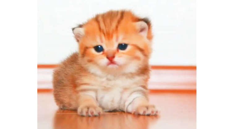 【困ったニャ】お家の中を探検しすぎて迷子になってしまった子ネコ。そこに迎えにきてくれたのは…♡