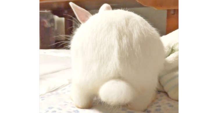 【魅惑のウサケツ♡】まるでふわふわな大福♪ ウサギさんの柔らかそうなお尻から…目が離せない〜っ!