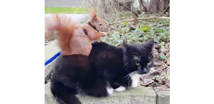 【背中でご飯!?】猫の背中で食事をとるリス。2匹の妙な関係性が、ちょっとだけ面白くて…♡