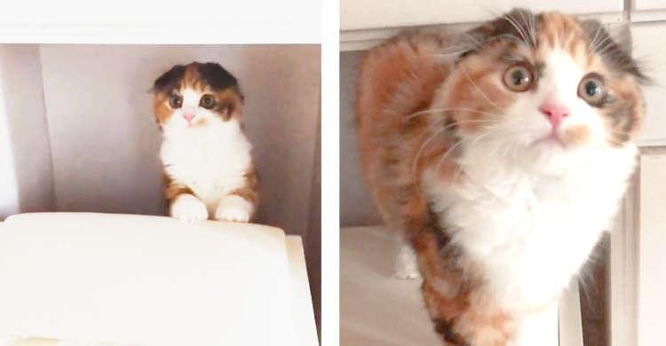 【家具の隙間から、は〜い♪】飼い主さんに名前を呼ばれると、ひょっこり出てくる子猫に…きゅん♡