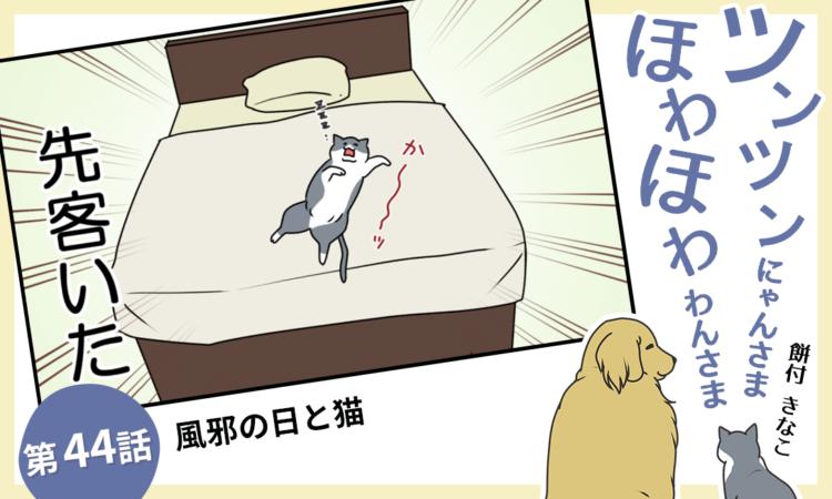 第44話:風邪の日と猫
