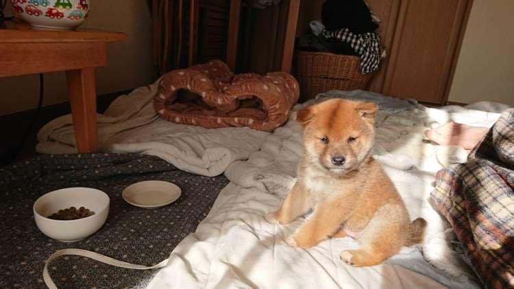【Shi-Ba編集部×PECO】柴犬だらけのムック本「シバマル」に登場してくれる柴犬を、大募集中…♪