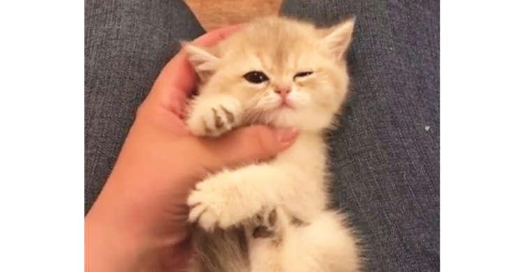 「気持ちいいニャ〜…」膝の上でナデナデされる子猫をのぞいてみたら、愛らしすぎる仕草の連続だった♡