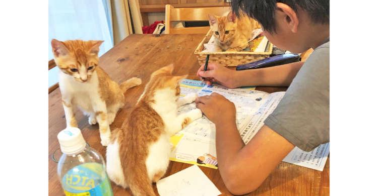 【監視員はニャンコ!?】ちゃんと宿題をしているか、見守ってくれる3匹の子猫たちが話題に…♡