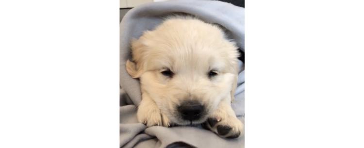 【ねむそうな表情がイイ♡】タオルに包まれてうとうと中の子犬ちゃん。とろけていく表情がたまらない♡