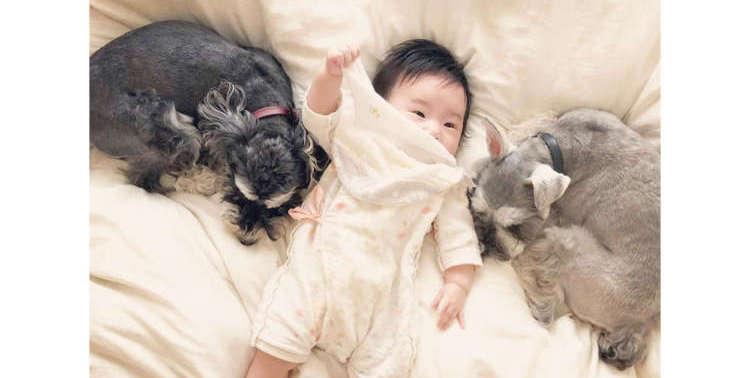 【お姉ちゃんになりました♡】赤ちゃんを優しく見守る2匹のワンコの姿に、胸がほっこりする(*´ェ`*)