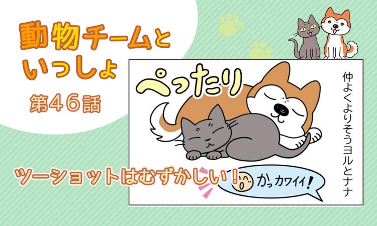 【まんが】第46話:【ツーショットはむずかしい!】描き下ろし漫画♪「動物チームといっしょ」