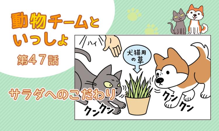 【まんが】第47話:【サラダへのこだわり】描き下ろし漫画♪「動物チームといっしょ」(著者:月田エミ)