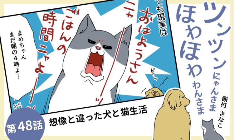 第48話:想像と違った犬と猫生活