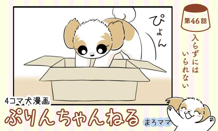 【まんが】第46話:【入らずにはいられない】描き下ろし漫画♪ 4コマ犬漫画「ぷりんちゃんねる」