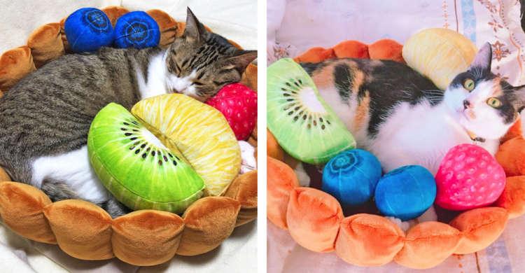 """タルトの中身は…ニャンコ♡ くつろぐ姿が可愛すぎて、思わず食べたくなっちゃう""""猫タルト""""♪(10枚)"""