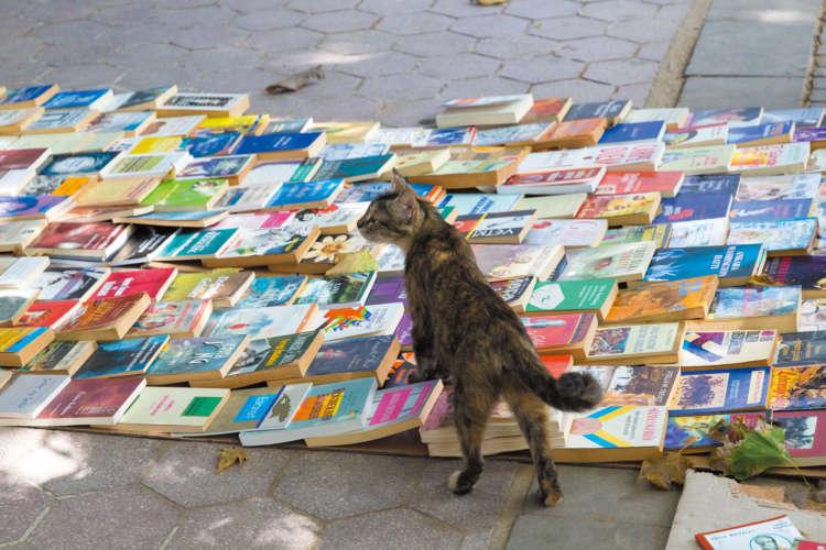 売り物の本の上に乗って、このあと注意を受けたキジトラさん。