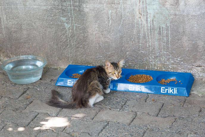 モスクの裏庭は猫たちの住処。