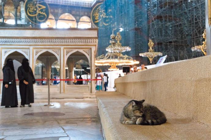 2009年にオバマ大統領(当時)が、アヤソフィア博物館を訪れた際に撫でた猫「グリ」。